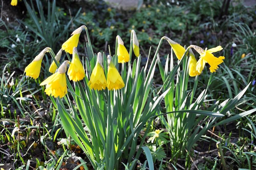 Ein Bild, das Gras, draußen, gelb, Pflanze enthält.  Automatisch generierte Beschreibung